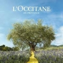 L'Occitane Shea Honey Foaming Gel