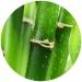 Bamboo Silica