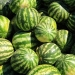 GLKi-Organics kalahari melon