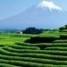 Body Shop Fuji Green Tea Body Lotion