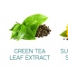 Agave Healing Oil Ingredients