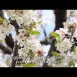 Fantastic Provence - A Walk Amongst the Cherry Trees | L'Occitane
