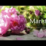 This is Marista - Natural Rose Skincare for You